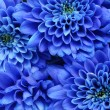 Details of blue flower for background or texture - Foto de Stock  