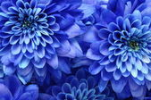 Details of blue flower for background or texture — Stock Photo