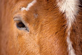 Close up of an horse eye — Stock Photo