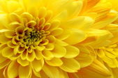 Close up of yellow flower — Stock Photo
