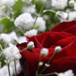 A rose and gypsophila - Stock Photo