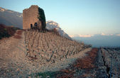 Vineyards and stone tower at sunset in France — Stock Photo
