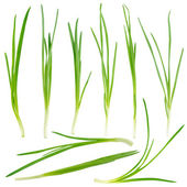 Young green onion set isolated on white — Stock Photo