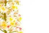 Chestnut flower in the spring — Stock Photo