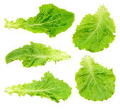 Conjunto isolada de folhas de salada verde — Foto Stock