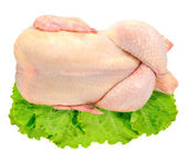 Fresh chicken on lettuce isolated — Stock Photo