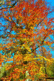 Fall leaves changing colors — Stock Photo