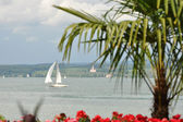 Palme am Bodensee — Stock Photo