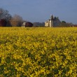 Motte castle at sunrise from a rapeseed field in spring, Usseau - Stock Photo