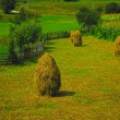 Stock Photo: Bundles of hay in Romania, Europe