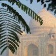 Royalty-Free Stock Photo: Tropical foliage with the domes of Taj Mahal soft in the background