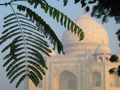 Tropical foliage with the domes of Taj Mahal soft in the background — Stock Photo