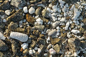 Seashore rocks, shells and corals background — Stock Photo