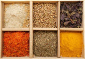 Mix Spicy Spices in box — Stockfoto