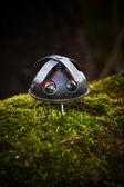 Propellerhead na floresta — Fotografia Stock