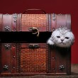 Foto de Stock  : Kitten in box