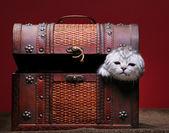 Kitten in box — Stok fotoğraf