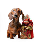 Dog with Christmas toy — Stock Photo