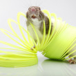 Stock Photo: Funny rat