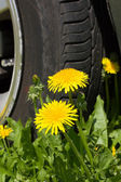 Flowers and a wheel — Stock Photo