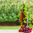 Wine, grape and vineyard — Stock Photo
