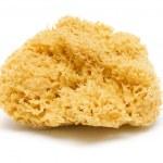 Natural Bath Sponge — Stock Photo #8859445