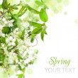 Spring blossom border - abstract floral background — Stock Photo