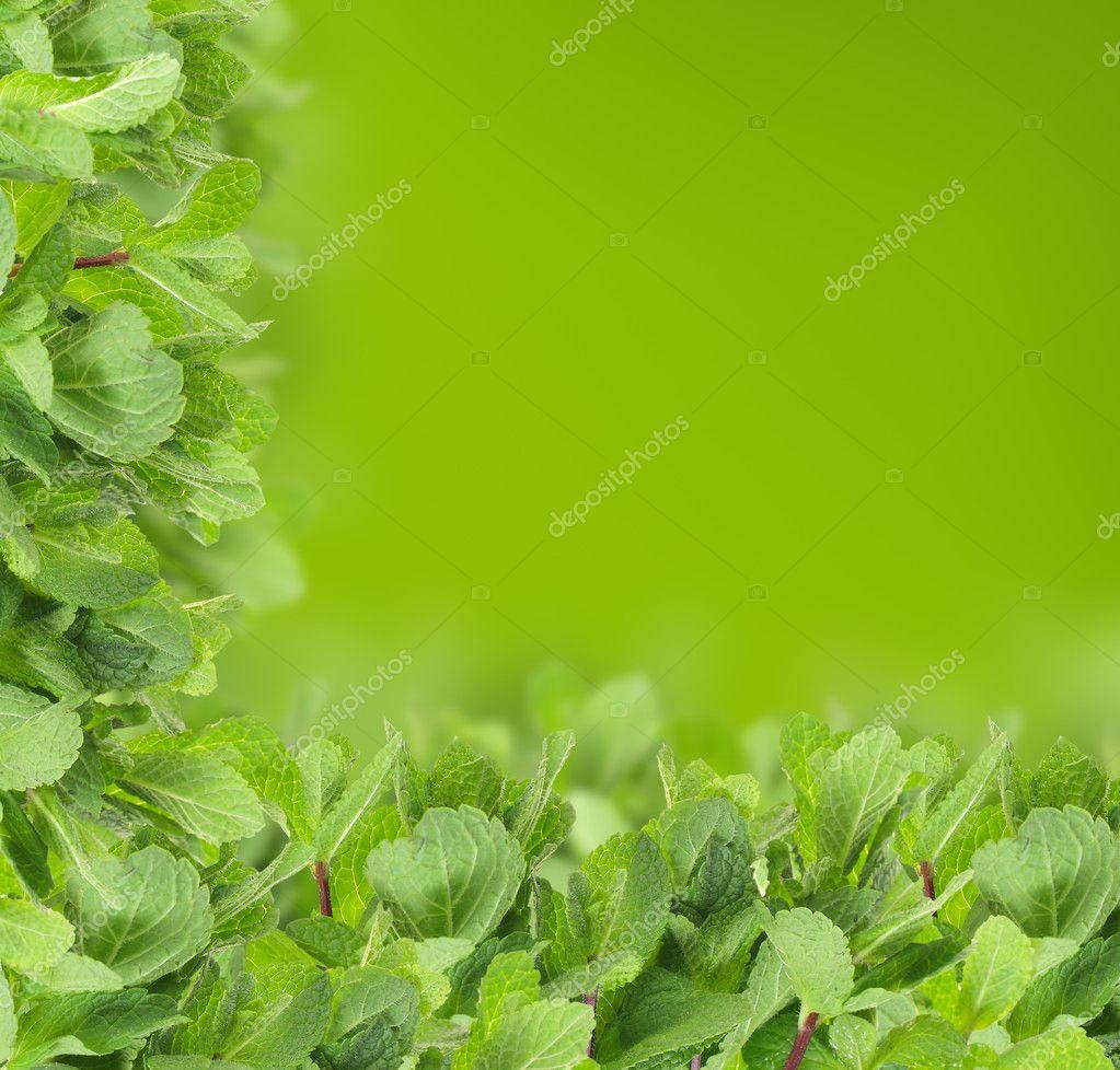 Mint background - green leaf border — Stock Photo © MillaFedotova ...