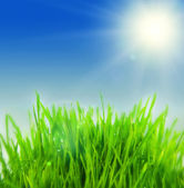 Fresh grass with sunbeams — Stock Photo