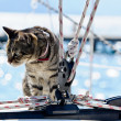 Stock Photo: Skipper cat with sailing yacht rigging