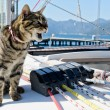 Skipper cat with sailing yacht rigging — Stock Photo