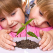 Foto Stock: Children are grown plant