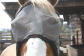 Close Up of Horse with Bug Mask — Stock Photo