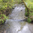 Stock Photo: Salmon Stream