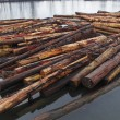 Stock Photo: Log Boom on River
