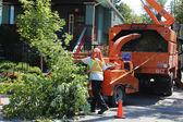 Tree Trimming Crew — Stock Photo