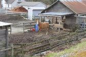 Cavalo no curral — Foto Stock