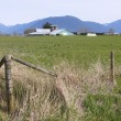 Farmland near Abbotsford, British Columbia — Stock Photo
