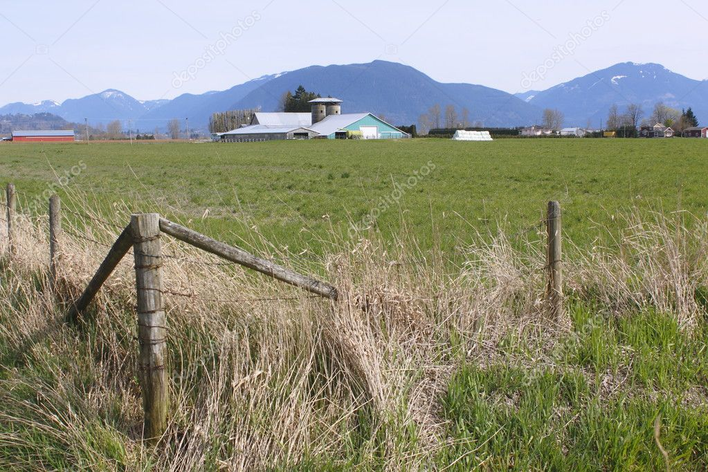 Farmland in the Fraser Valley near Abbotsford, British Columbia.  — Stock Photo #9960899
