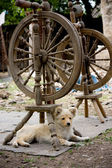 Old spinning wheels — Stock Photo