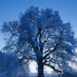 Royalty-Free Stock Photo: Snowy tree