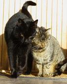 Två katter — Stockfoto