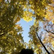 Stock Photo: Fall autumn colored forest foliage