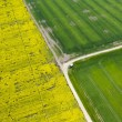 Stock Photo: Aerial view of affected rapeseed (brassicnapus) field and green crops