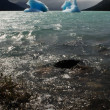 Stock Photo: Two icebergs floating on sea