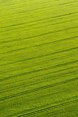 Aerial view of green crops with tractor tracks — Stock Photo