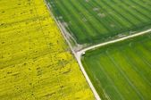 Aerial view of affected rapeseed (brassica napus) field and green crops — Stock Photo