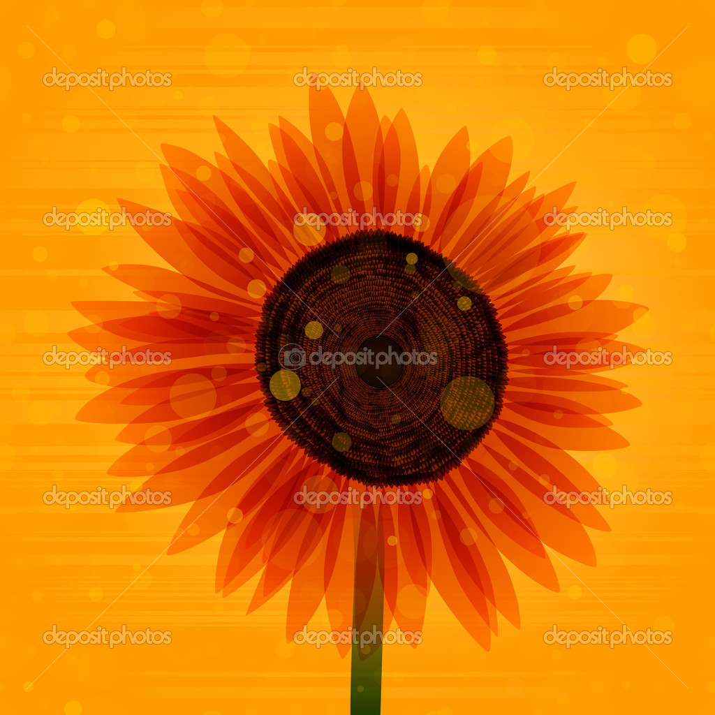 Sunflower illustration. EPS10. Transparency used.  Stock Vector #8339725