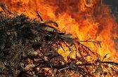 Fogo, a força da natureza — Fotografia Stock