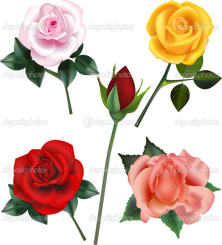 Four rose blooms and a rose bud — Stock Vector #10184673
